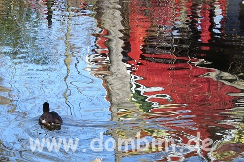 Ente im Wasser