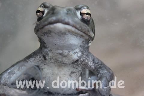 Zoo-Frosch