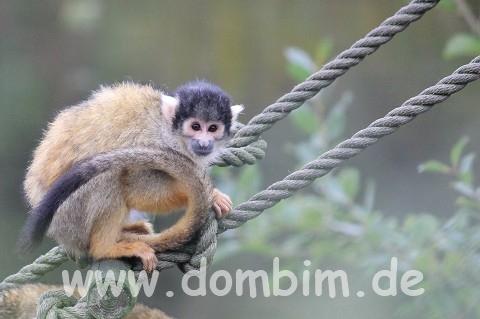 Ree Park Safari Totenkopf Affe