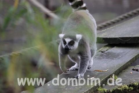 Ree Park Safari Lemuren Affen