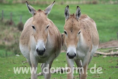 Ree Park Safari Onager