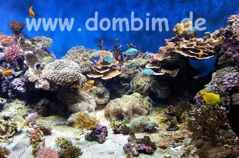 Kattegatcentret Grenaa Fischbecken